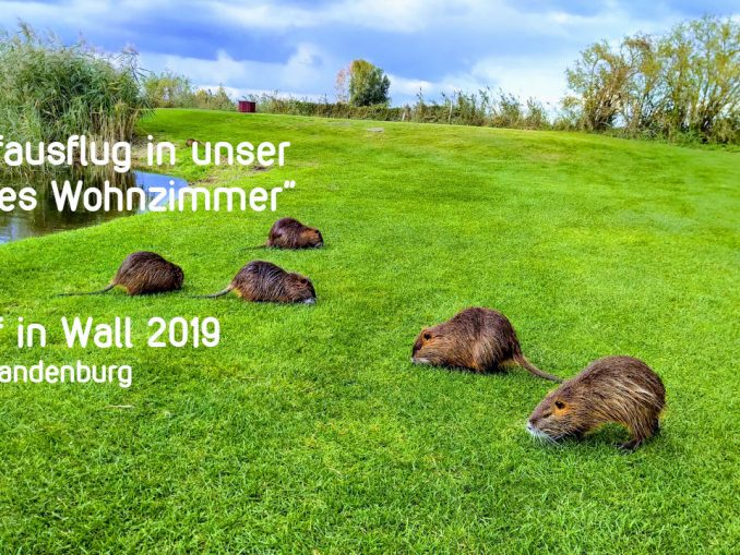 Golf in Wall, Reise in die Vergangenheit, Golfsport.News